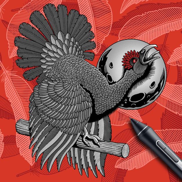 allendale-black-grouse-digital-drawing-b