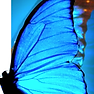 Healing Wings Counseling Butterfly LOGO