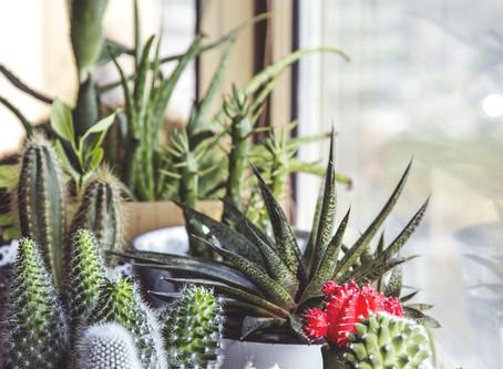 インテリアと植物