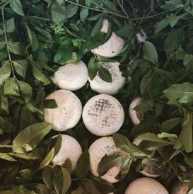 Fase di stagionatura in barrique con foglie di noce