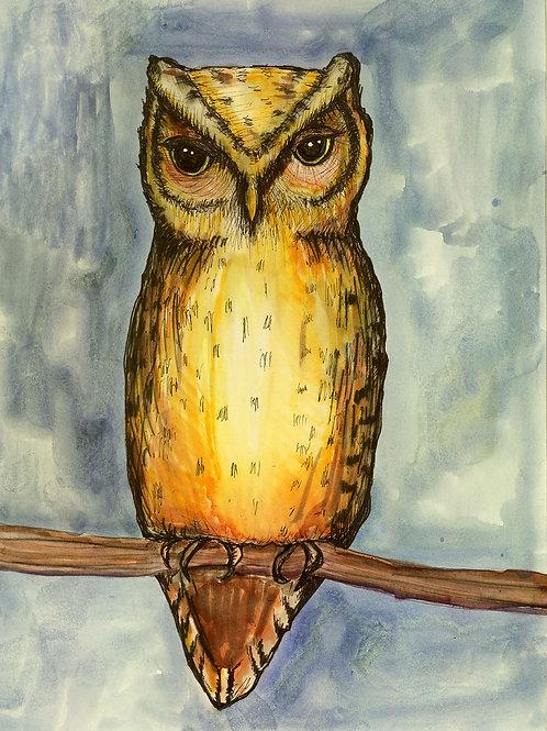 Night Owl print on paper