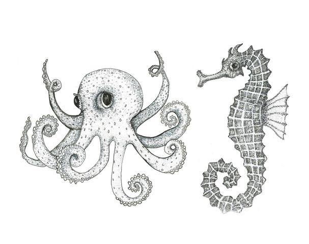 Octopus.Seahorse.web.jpg