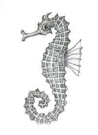 Grey Series: Seahorse II