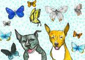 Pollinators: Bug and Willa