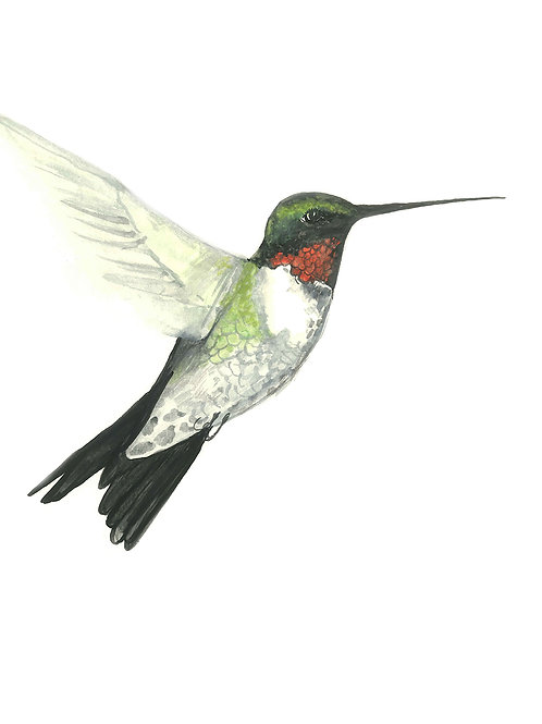 Ruby throat Hummingbird Folded Note Card