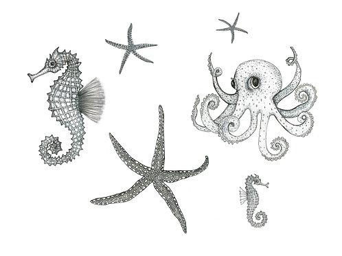Grey Series: Starfish Octopus Seahorse print