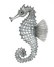 Gray Series: Seahorse