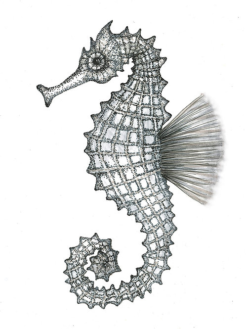Grey Series: Seahorse print on paper small