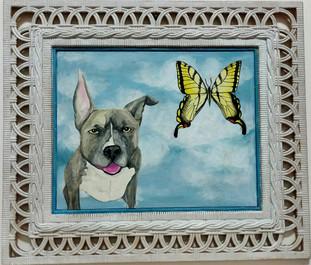 Bug Butterfly Sky