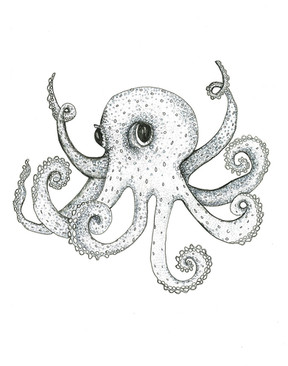 Grey Series: Octopus