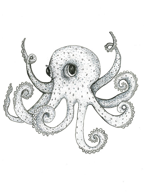 Grey Series: Octopus print on paper small