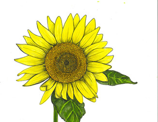 Sunflower Series I