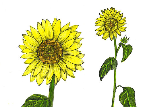 Sunflower Series Flower Power Folded Note Card
