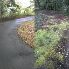 Heavily Soiled Driveway