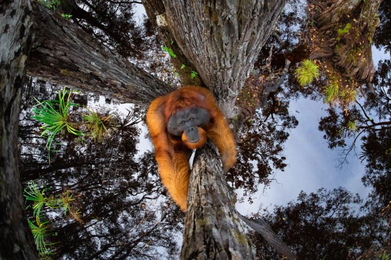 © Thomas Vijayan / Nature TTL Hayvan Davranışı ve Genel Kazanan Resim başlığı: Dünya Ters Gidiyor