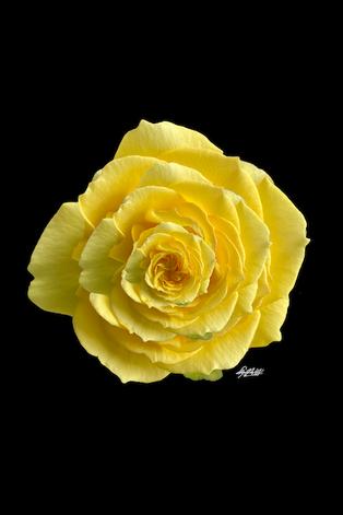 Photo: Rosa A X20