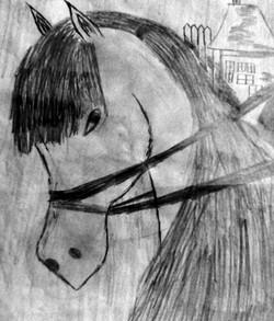 Çiftlik Atı