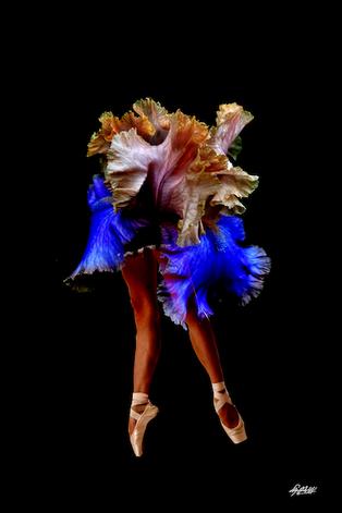 Photo: Bailarina Collection II
