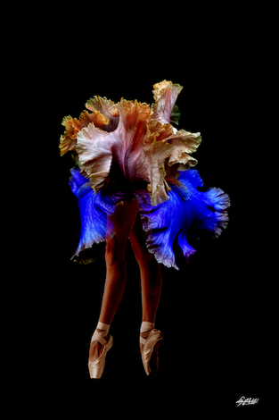 Photo: Bailarina Collection I