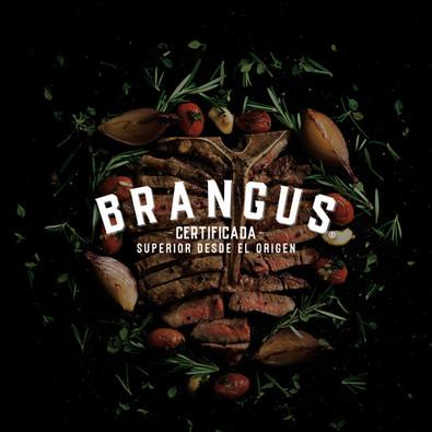 Brangus Certificada