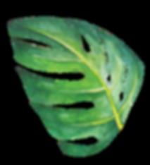 Hoja selva_1.png