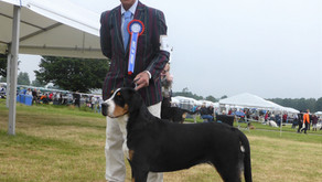 Southern Counties Championship Show