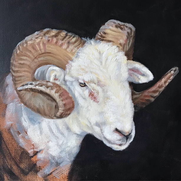 Study of a Sheep