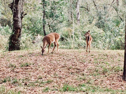 Deer at Laura Walker State Park, GeorgiaKathleen Anderson LMHC LLC CoupleScience.org