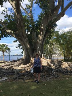 Banyan Tree Edisons Summer Home Kathleen Anderson LMHC LLC CoupleScience.org