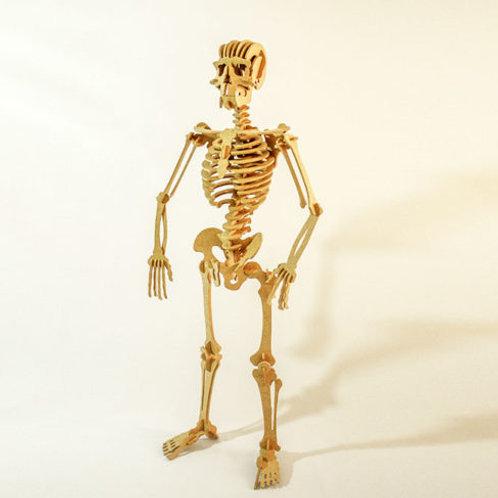 Esqueleto - Quebra Cabeça 3D