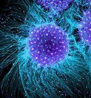 stem cells 1.jpg