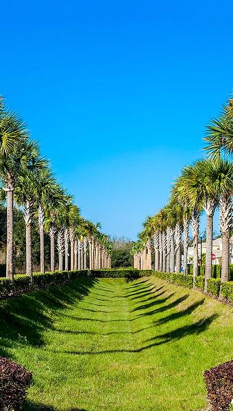 Zenodro-Homes-Serene-South-Florida-Palm-