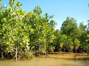 eden-mangrove-cropped.jpg