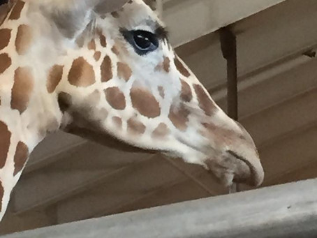 Therapy: Just Like Falling in the Giraffe House