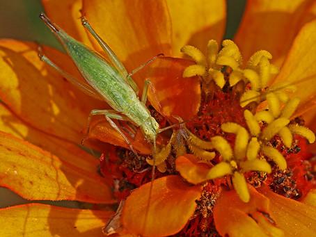 Therapy: Do I Hear Crickets?