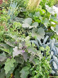 Carmichael Environmetal Food Forest