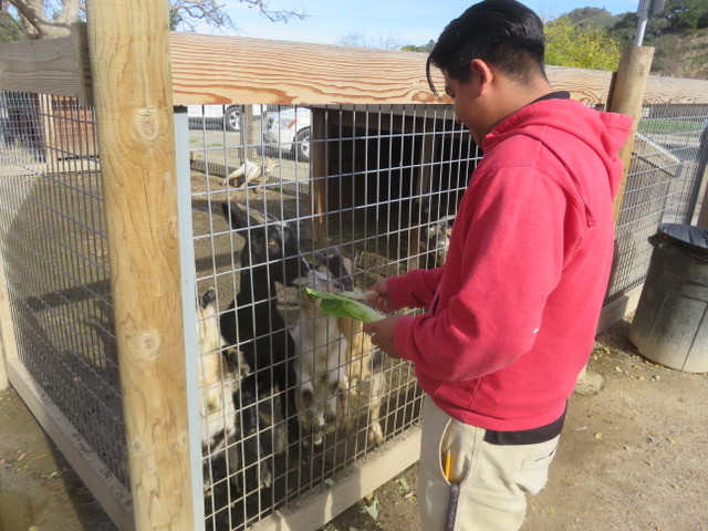 PBHS Visits Avila Valley Barn