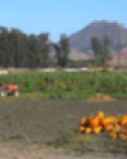 Oct 2019 City Farm Newsletter.jpg