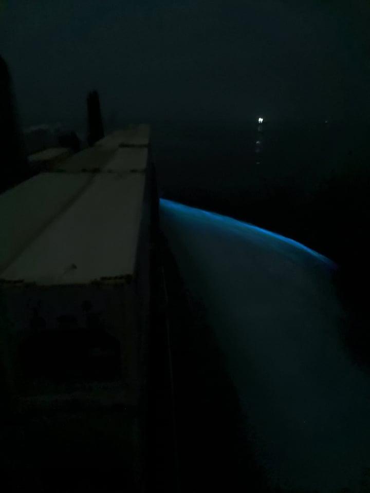 Algas luminosas en Japón