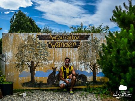 Wallabies en tierras kiwis