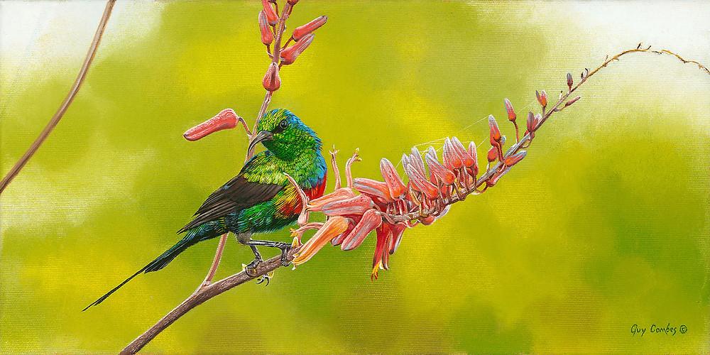 Guy Combes | Old-World-Jewel (Sunbird)