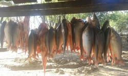 Nuestro pescadores en pesca