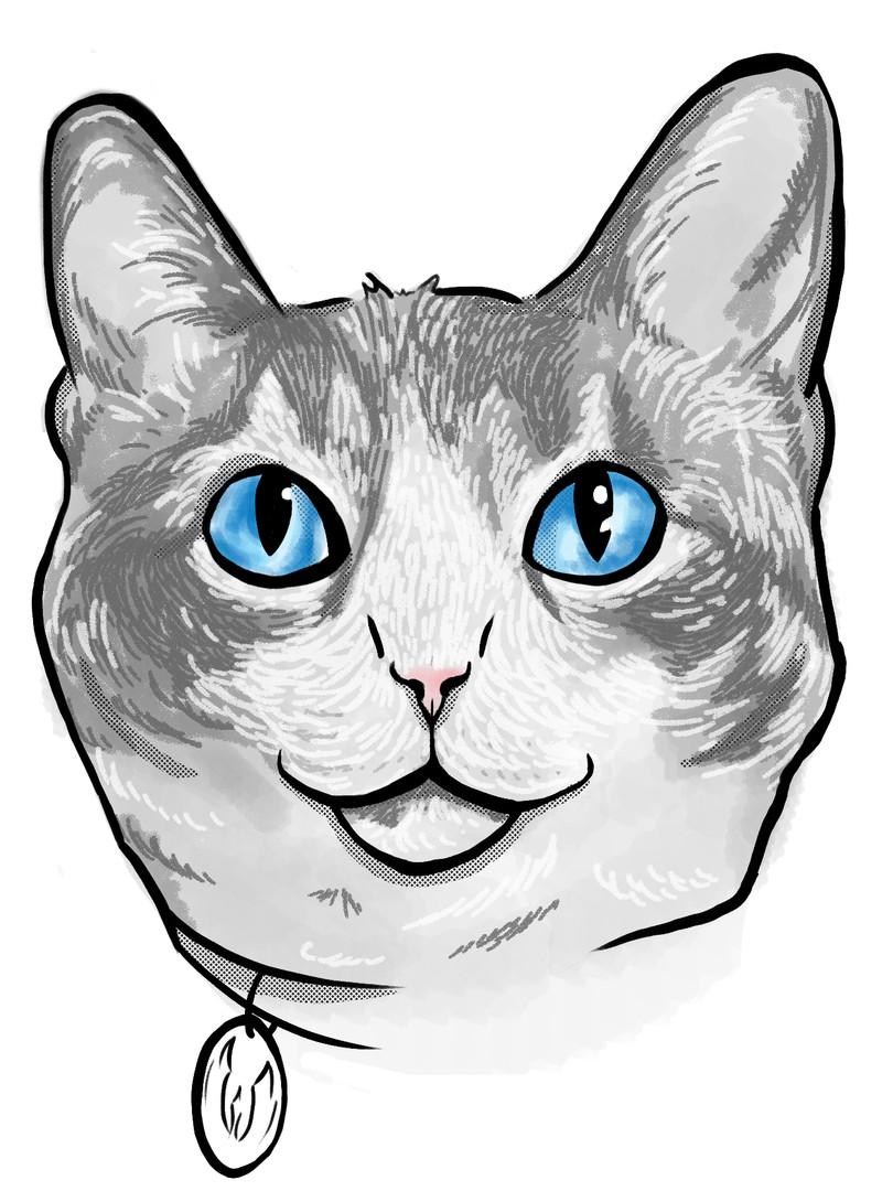 Tauntaun the Cat