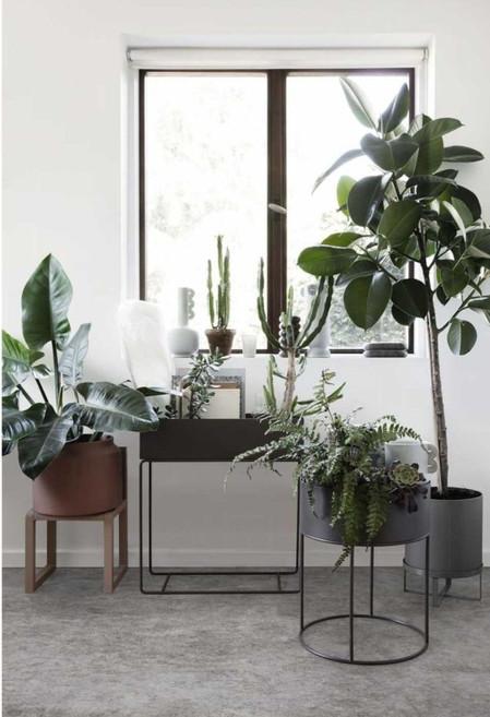 Plant Box.jpg