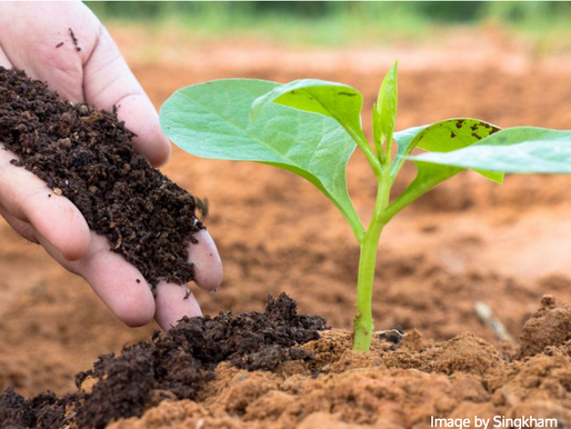 Compost: A Beautiful Life Cycle