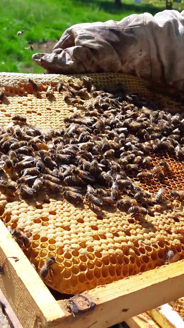 Terre d'abeilles Richard cuartero