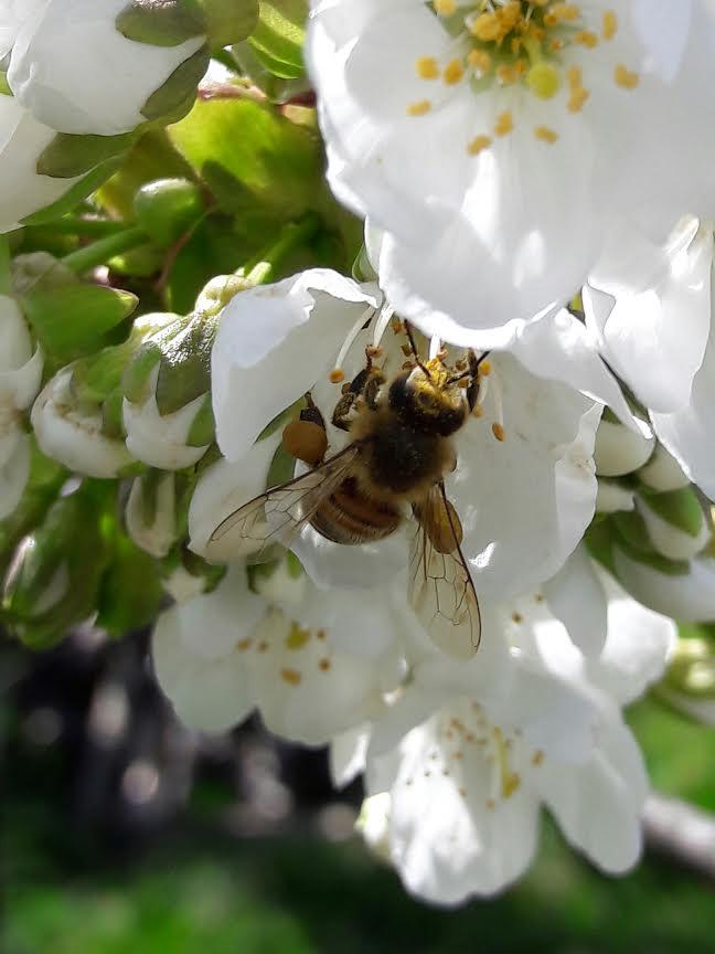 terre d'abeille fleur