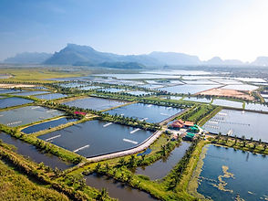 AERIAL VIEW OF AQUACULTURE_edited.jpg