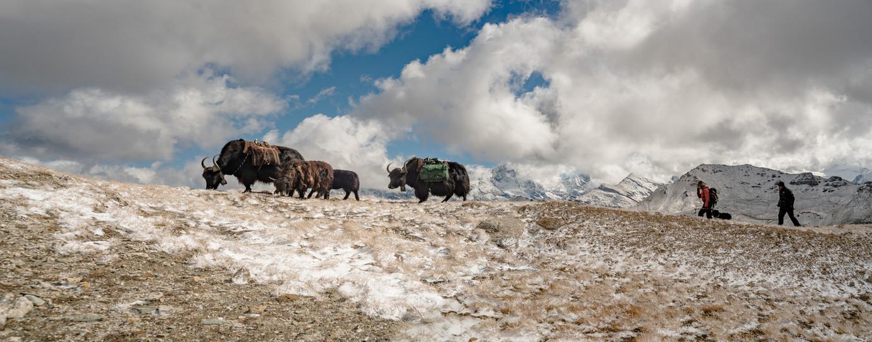 Cahier du yak berger - 1 sur 1.jpg