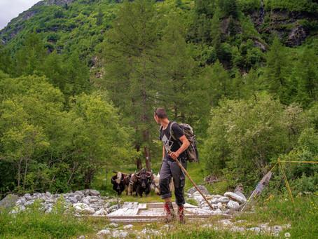 Recrutement bergers de yaks